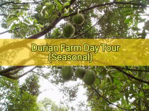 Durian Farm Day Tour Package(Seasonal)